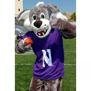 Northwestern Wildcats Postcard Willie the Wildcat inside Ryan Field NU0002