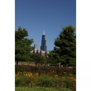 Chicago Postcard: Willis (Sears) Tower CPC0049
