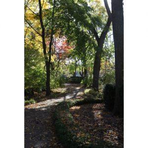 Northwestern Wildcats Postcard Pathway on Northwestern University Campus NU0042